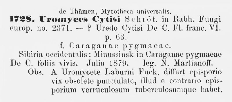 Uromyces cytisi image