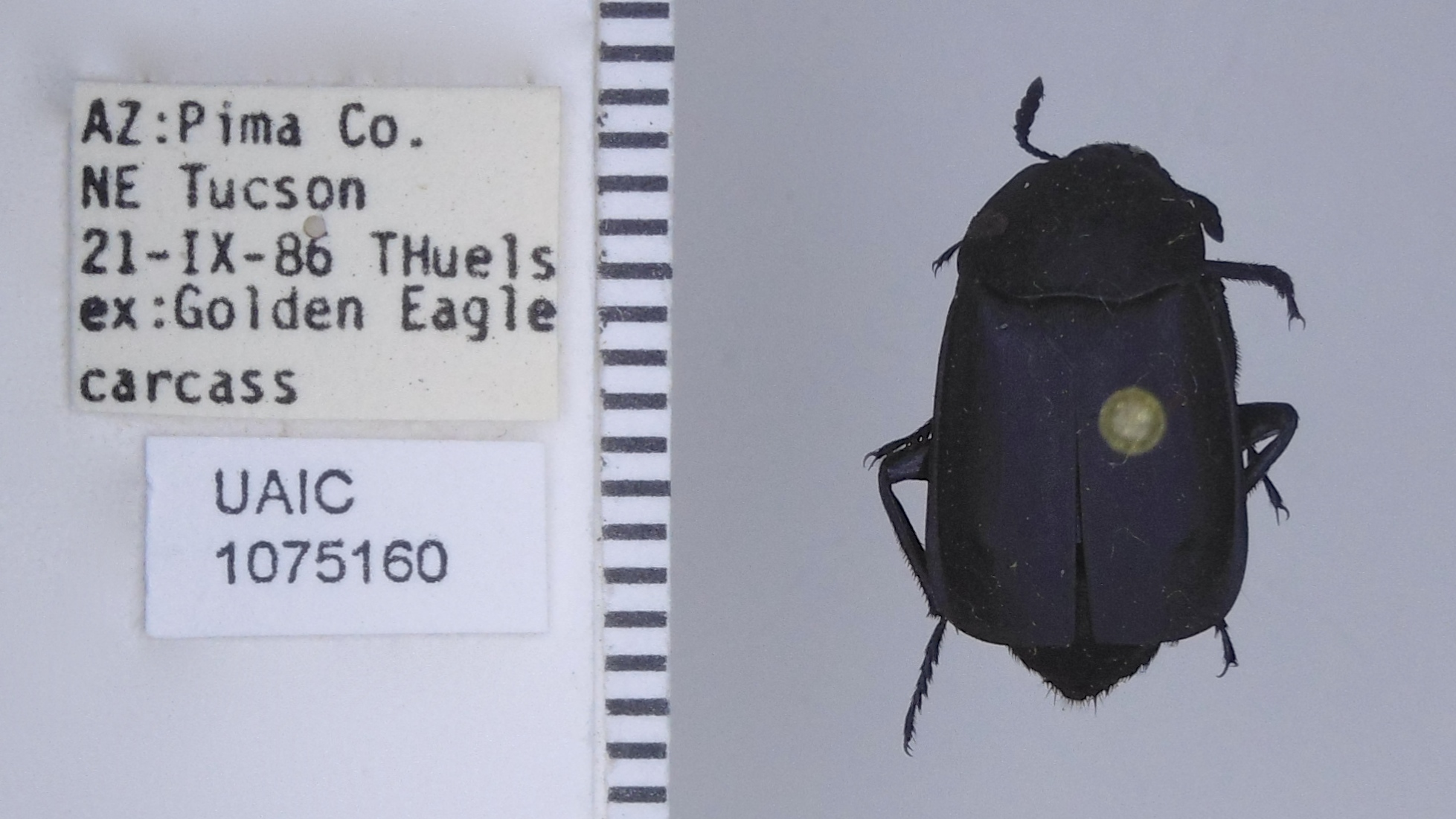 Example Insect Natural History Data