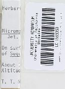 Micromphale sequoiae image