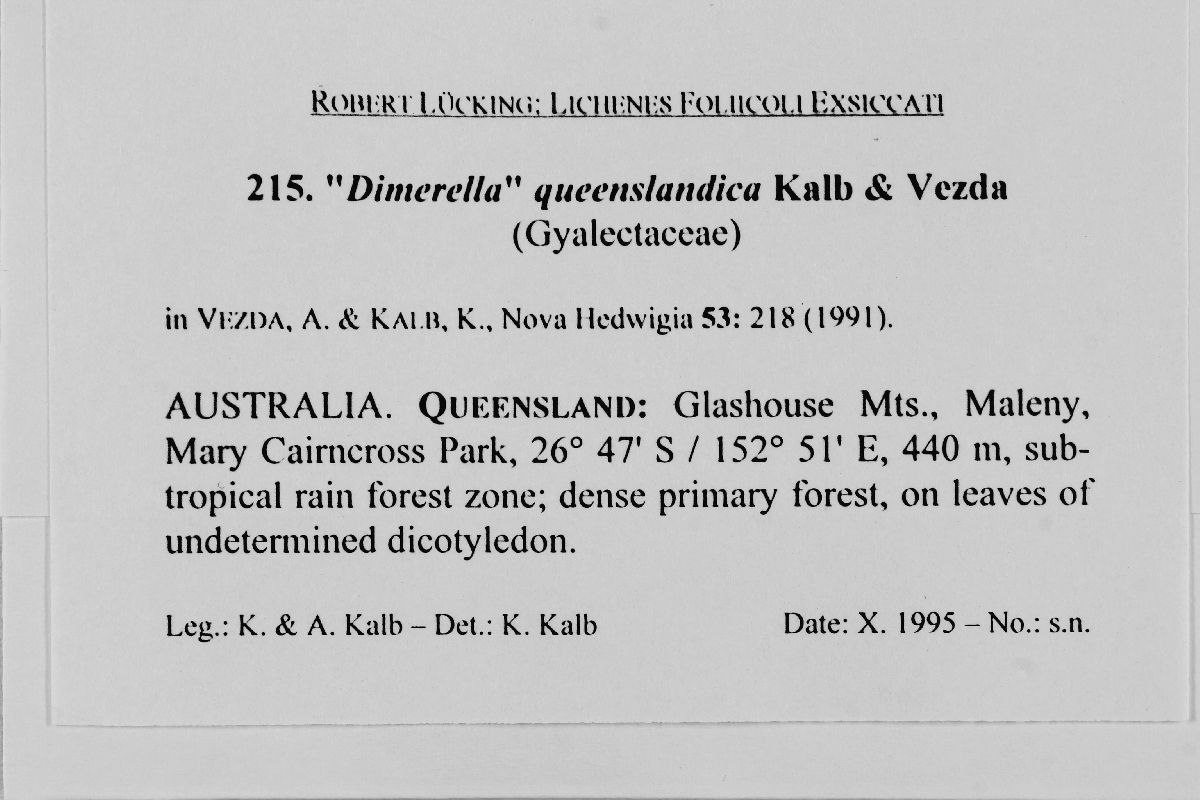 Dimerella queenslandica image